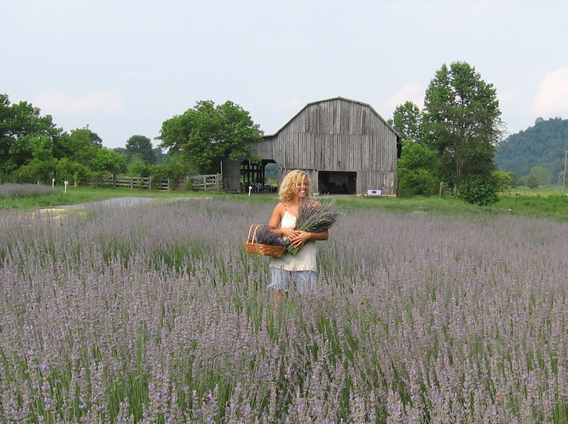 Travel Here: Lavender Farms in Virginia and Beyond | Eat,Sleep,Garden