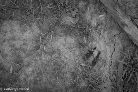 deer foot print