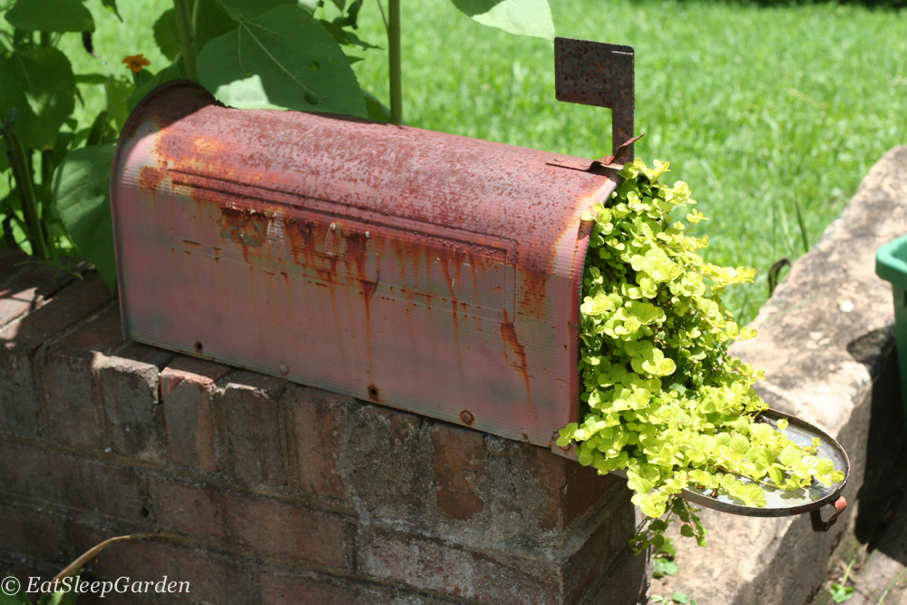 Diy Mailbox Planter Eat Sleep Garden